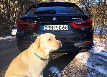 BMW M550D CarSign Kennzeichenhalter und Inlay